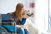 Girl in wheelchair with service dog indoors poster