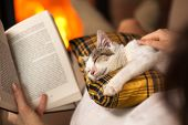 Woman reading by the fire and comforting her rescue kitten - purrfect evening relaxation, closeup, s poster