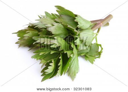 Lovage on a white background