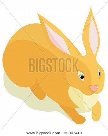 Sitting fluffy rabbit.