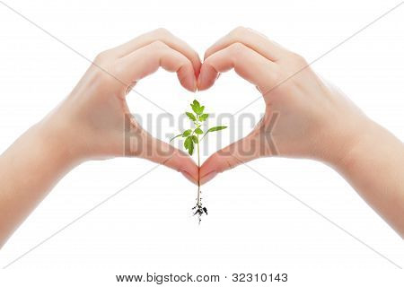 Love And Protect Nature And Life