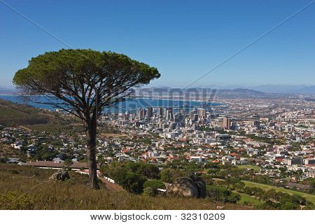 Signal Hill View