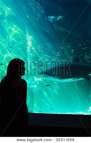 Shark Sillhouette