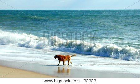 Dog On Montauk Beach