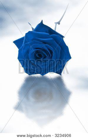 Single Blue Rose