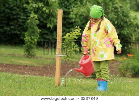 Little Girl Watering Apple Tree