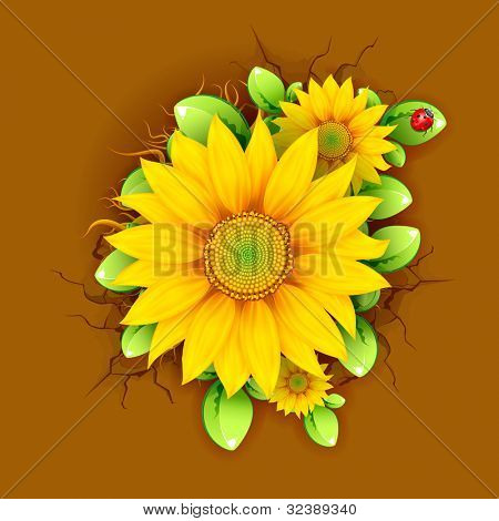 illustration of sunflower plant from top view