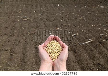 Agricultural Concept