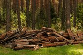 A Pile Of Firewood In The Forest. Firewood In A Forest Glade. Firewood Recycling. Forest Protection  poster