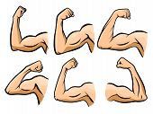 Cartoon Hand Muscle. Strong Arm, Boxer Arms Muscles And Strength Hands Hard Gym. Arm Fitness Guy Han poster