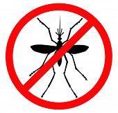 stock photo of malaria parasite  - Mosquito vector silhouette - JPG