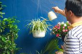 Asian Man Watering Plant At Home, Businessman Taking Care Of Chlorophytum Comosum ( Spider Plant ) I poster