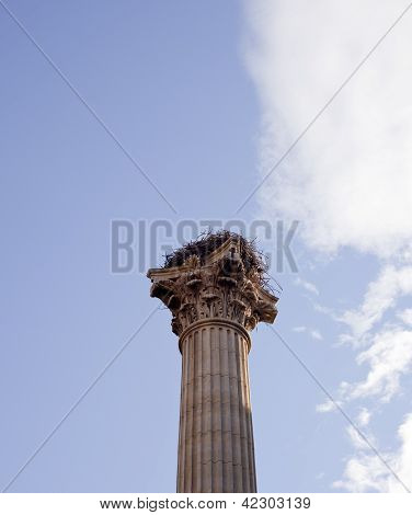 Column Of The Memorial For The Vii Legion, Leon