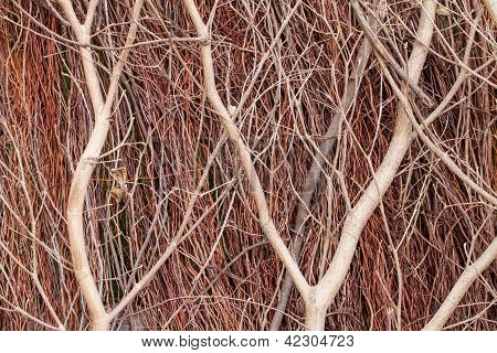 Close Up Of Red Brushwood