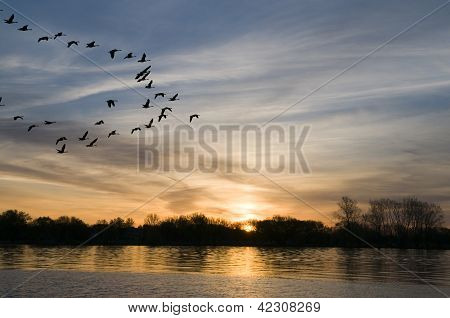 Geese At Sunrise