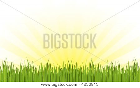 Spring Seamless Grass With Sunrays Background