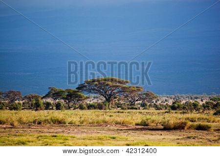 Savanna landscape, foot of the Mount Kilimanjaro in Africa, Amboseli, Kenya
