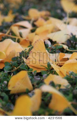 Leaves In The Bobboli