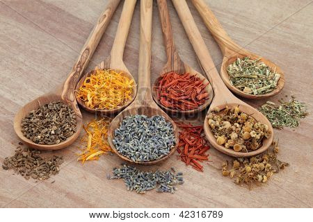 Naturopathic healing herb selection in olive wood spoons over papyrus background.