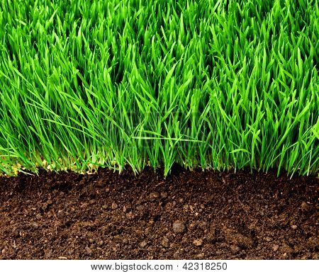 healthy grass growing in soil pattern