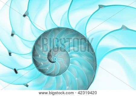 Detailed photo of a halved backlit blue shell of a chambered nautilus (Nautilus pompilius)