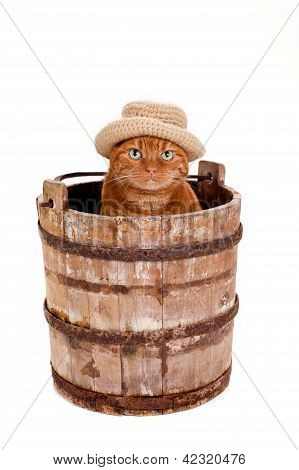 Orange Cat Wearing a Hat and Sitting in a Bucket