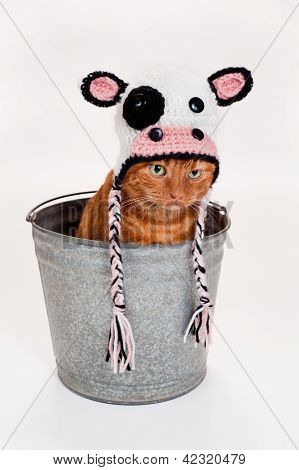 Orange Cat Wearing a Cow Costume and Sitting in a Bucket