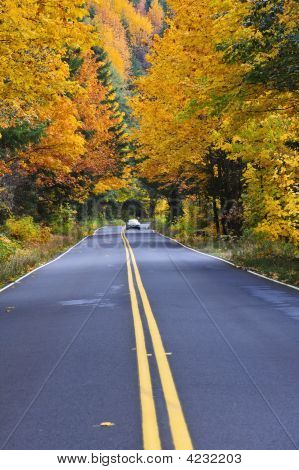 Car Driving On A Forest Road In Fall