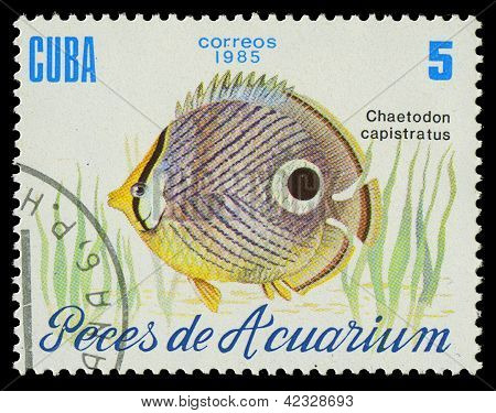 Cuba-circa 1985: A Stamp Printed In Cuba Shows Fish Chaetodon Capistratus, Circa 1985