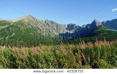 brow in mountains,Poland,Tatras