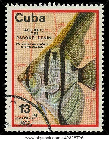Cuba - por volta de 1977: Um selo imprimido em Cuba mostra peixes Pterophyllum Scalare, por volta de 1977
