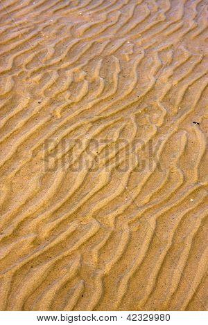 Shore Texture And Curved Line In Rio De La Plata