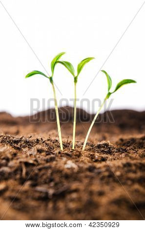 Green seedlings in new life concept