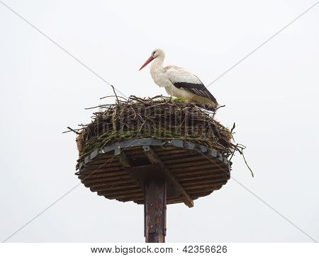 White stork on its nest in winter