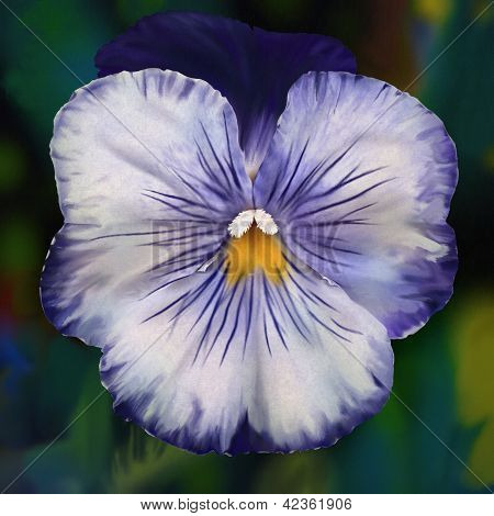 Cheeky Faced Blue Pansy - Digital Painting