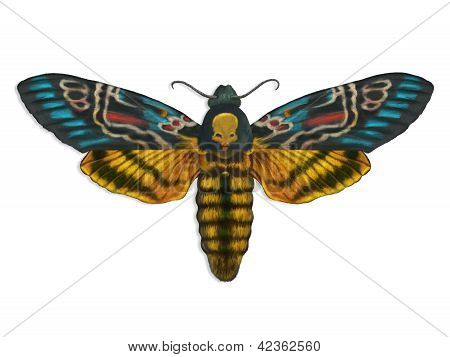 Death's Head Moth Art Illustration