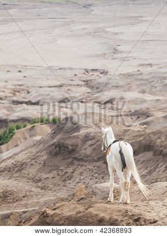 Cavalo branco stand na cratera de Desert Sand Dune montanha paisagem de Bromo vulcão, ilha de Java do leste eu