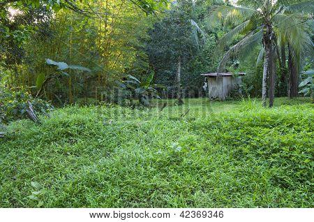 Rain Forest Village And Hut