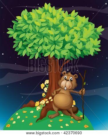 Beispiel für ein Biber unter einem großen Baum