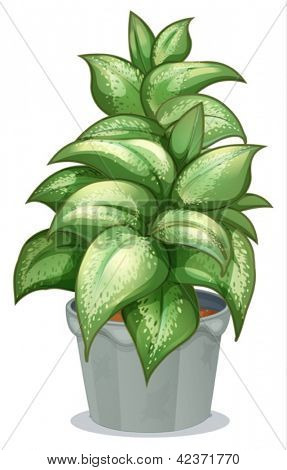 Illustration of a leafy plant on a white background