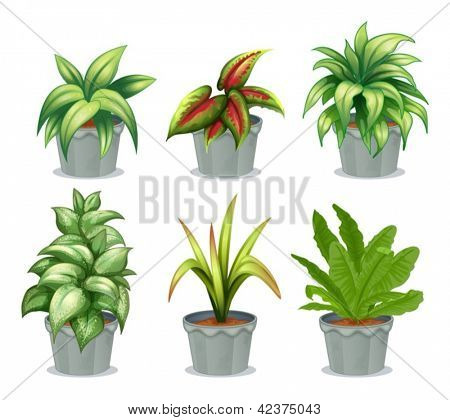 Illustration of green leafy plants on a white background