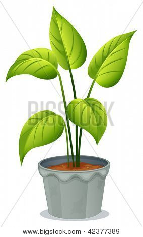 Illustration of a pot of green plant on a white background