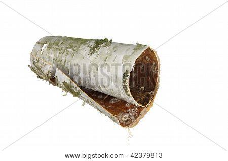 Rolled Up In Roll Birch's Bark
