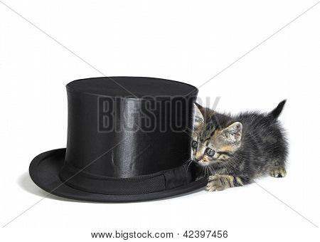 Kitten Hiding Behind A Top Hat