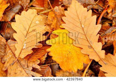 Autumn Time: Closeup Of Autumn Leaves