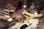 pic of albinos  - Alchemy still life with Lavender Tiger Albino python - JPG