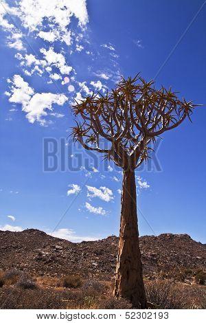 Quiver tree portrait
