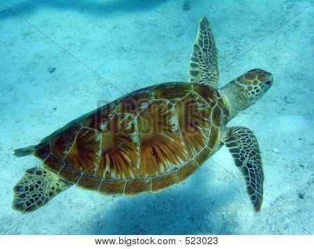 Nadar tortuga 3