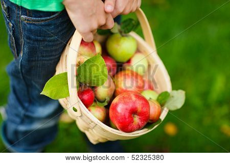 Little boy holding a basket with red apples
