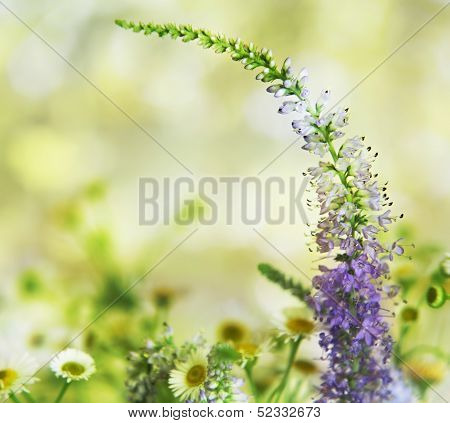 Violet Flower And Camomiles Closeup